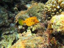 рыбы малые Стоковое Изображение RF