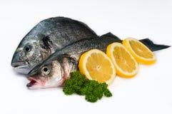 Рыбы морепродуктов свежие - в белой предпосылке 02 Стоковые Изображения RF