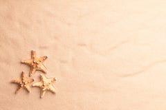 Рыбы морской звезды на текстуре песка пляжа Стоковые Фото