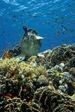 Рыбы морской черепахи и стекла, коралловый риф стоковое фото