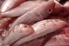 Рыбы моря в рынке Стоковое Изображение