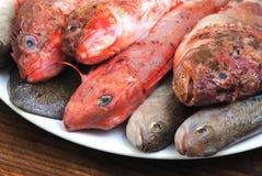 Рыбы моря Стоковые Изображения