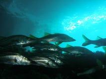 рыбы моста вниз Стоковая Фотография RF
