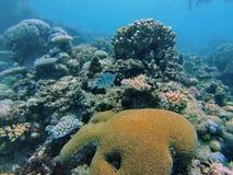 Рыбы на большом барьерном рифе Стоковое Фото