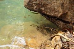 Рыбы на водопаде Стоковое Фото