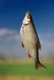 Рыбы на крюке Стоковые Изображения RF