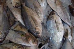 Рыбы на предпосылке льда Стоковое Изображение