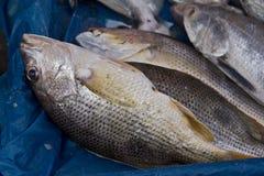 Рыбы на рынке Стоковые Изображения