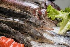 Рыбы на счетчике в супермаркете Стоковое фото RF
