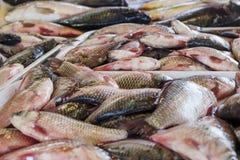 Рыбы на счетчике Стоковое фото RF