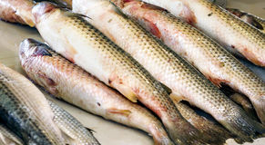 Рыбы на счетчике Стоковые Изображения