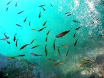 Рыбы на чисто озере Стоковые Изображения