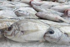 Рыбы на льде Стоковая Фотография RF