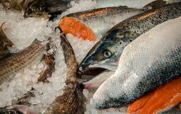 Рыбы на льде Стоковое Изображение