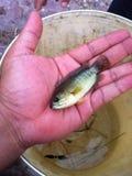 рыбы немногая Стоковые Изображения