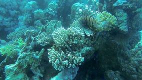 Рыбы огня глубоко в море акции видеоматериалы
