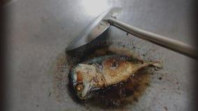 Рыбы огня Стоковое Изображение RF