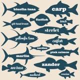 Рыбы океана vector силуэты с именами изолированные на белой предпосылке иллюстрация вектора