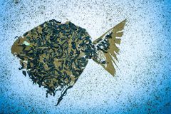 Рыбы от чая и циннамона Стоковое фото RF