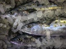 Рыбы парного молока на льде в азиатском рынке стоковые изображения rf