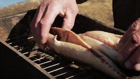 Рыбы подготовки руки старика для курения или жарить Варящ скумбрию в коптильне на открытом воздухе видеоматериал