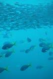 рыбы под водой стоковое изображение