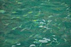 Рыбы под морем Стоковое Изображение RF