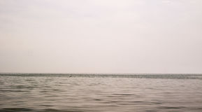 Рыбы поскакали из моря в расстоянии Стоковые Изображения