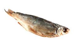 рыбы посолили Стоковое Фото