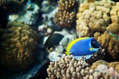 Рыбы под водой Стоковое Фото