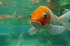 Рыбы под водой Стоковое фото RF