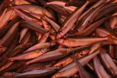 рыбы предпосылки Стоковая Фотография RF