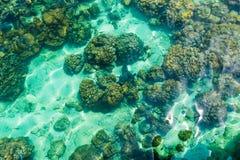 Рыбы приближают к дну моря Стоковые Фото
