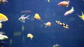рыбы плавая тропический underwater акции видеоматериалы