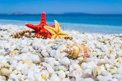 Рыбы раковины и звезды на белых камешках Стоковые Изображения