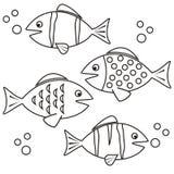 Рыбы - расцветка Стоковые Фотографии RF
