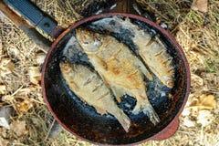 Рыбы реки зажаренные в сковороде Стоковые Фото