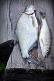 Рыбы реки над старое деревянным Стоковое фото RF