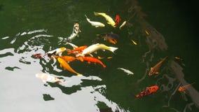 Рыбы ремесла Стоковое Изображение RF