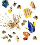 Рыбы рифа, партия морских рыб изолированная на whi Стоковое Фото