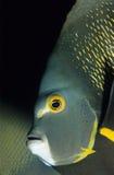 рыбы рыболова стоковое фото rf