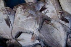 Рыбы рынка Стоковые Изображения RF