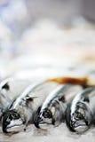 рыбы свежие Стоковые Изображения