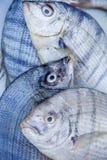 рыбы свежие Стоковое Изображение