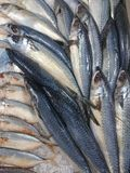 рыбы свежие стоковые фотографии rf