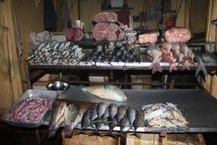 рыбы свежие Стоковые Изображения RF