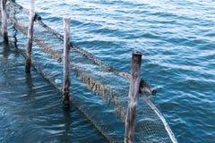Рыбы сетей Стоковая Фотография RF