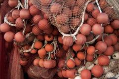 Рыбы сети стоковая фотография