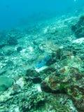 Рыбы скалозуба в океане природы стоковое фото rf