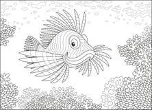 Рыбы скорпиона на рифе Стоковое фото RF